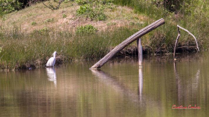 Aigrette garzette. Réserve ornithologique du Teich. Samedi 3 avril 2021. Photographie © Christian Coulais