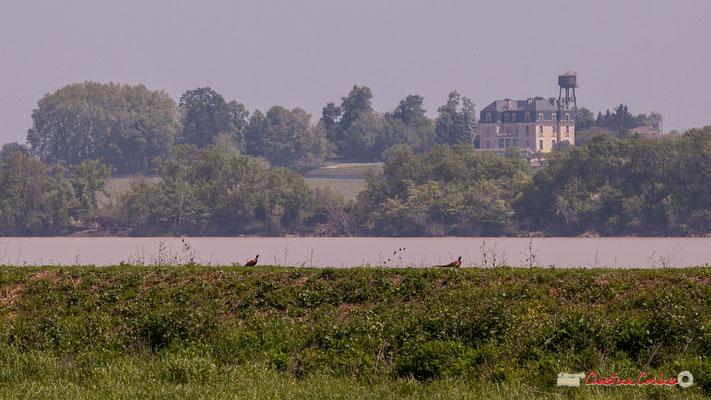 Au loin le château de Ségonzac. Visite de l'Île Nouvelle, Gironde. 06/05/2018