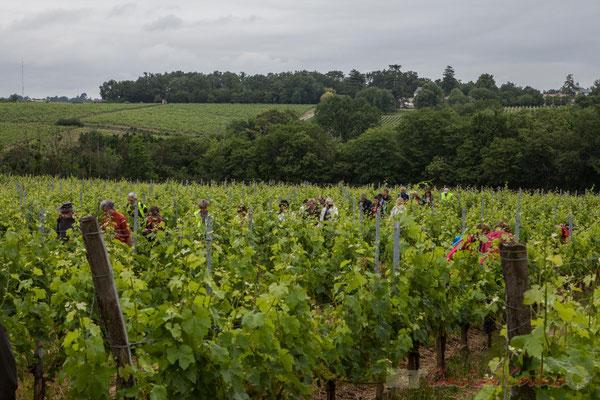 Château Duplessy depuis le Château Brethous, Camblanes-et-Meynac. Randonnée pédestre Jazz360 2016, de Cénac à Quinsac