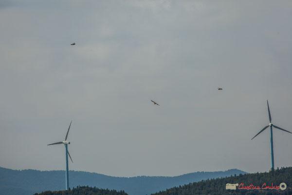 Vol de rapaces et éoliennes / Navarra