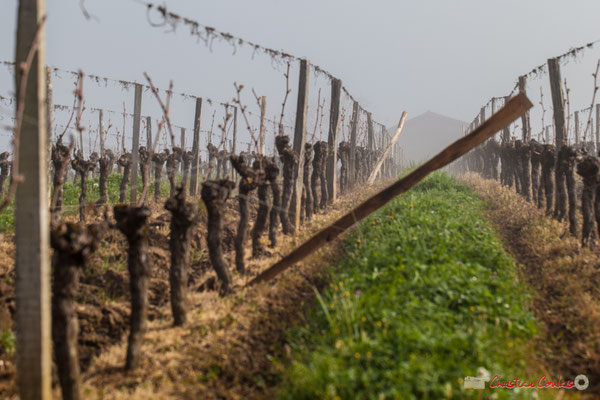 Piquetage à venir. Vignobles du Château du Garde, Cénac. 3 avril 2017