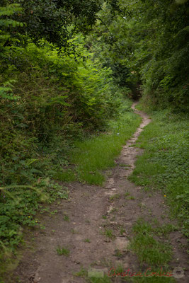 Chemin de Brice, Cénac. Randonnée pédestre Jazz360 2016, de Cénac à Quinsac, 12/06/2016