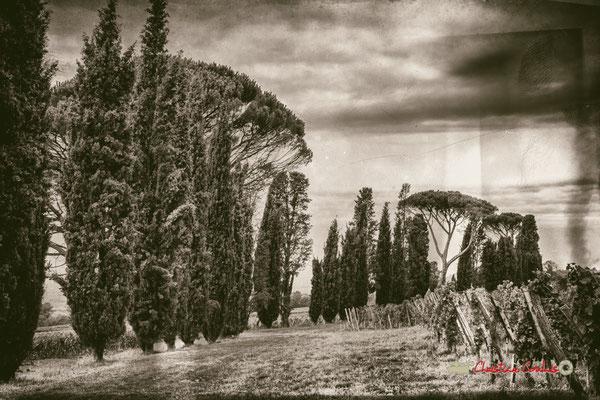 Une partie des 130 cyprés ponctués de pins parasols plantés en 1937 par François Mauriac au Domaine de Malagar. Centre François Mauriac, Saint-Maixant. 28/09/2019 Reproduction interdite - Tous droits réservés © Christian Coulais