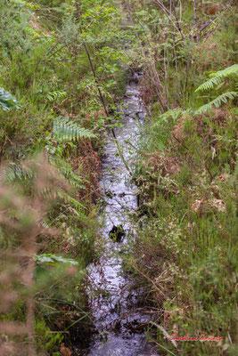 2/2 Craste Forêt de Migelan, espace naturel sensible, Martillac / Saucats / la Brède. Samedi 23 mai 2020. Photographie : Christian Coulais