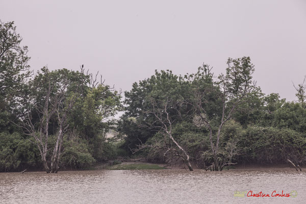 Les abords Est de l'île Nouvelle. Visite de l'île Nouvelle. 06/05/2018