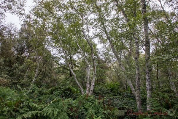 Hourtin, Lagune de Contaut, Espace Naturel Sensible de Gironde