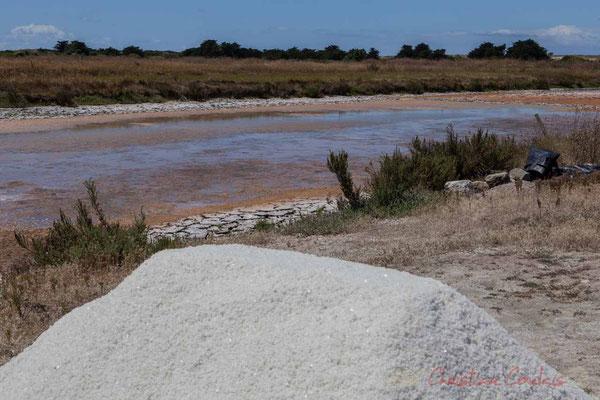 Mulons au sein des œillets des marais salants de l'Île de Noirmoutier entre l'Epine et Noimoutier en l'Île, Vendée, Pays de la Loire