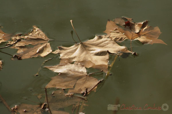 """tree leaf fall art"". Canal latéral à la Garonne, Damazan"