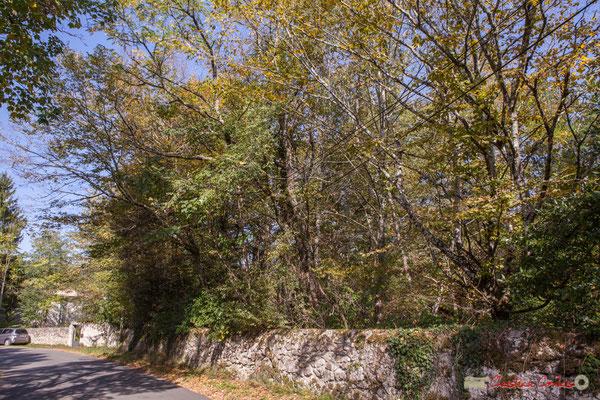 Mur en pierre sèche du Domaine de Donlabade. Avenue du Rauzé, Cénac, Gironde. 16/10/2017