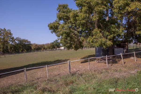 1 Pâturages pour les moutons et chevaux. Hameau du Cloutet, Cénac, Gironde. 16/10/2017