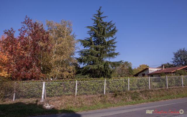 Très agréable parc d'une propriété, encore plus valorisée en automne. Avenue de Lignan, Cénac, Gironde. 16/10/2017