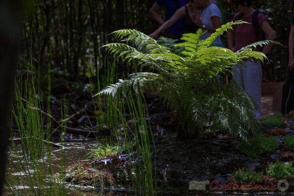 Silence ! ça mousse; Chloé Ricou, paysagiste DPLG; Agathe Le Mire, paysagiste; Florian Dubos, jardinier-botaniste; France. Mercredi 26 août 2015. Photographie © Christian Coulais