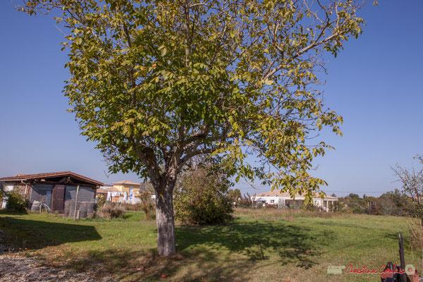 3 Terrain constructible, côté ouest. Allée du Cloutet, Cénac, Gironde. 16/10/2017