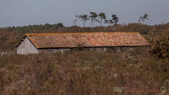 Bâtiment d'exploitation du Domaine de Graveyron, Audenge, espace naturel sensible de Gironde