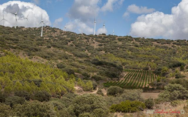 Cereales, viñedos y molinos de viento, entre Ujué y San Martín de Unx, Navarra / Céréales, vignes et éoliennes, entre Ujué et San Martin de Unx (objectif 63mm)