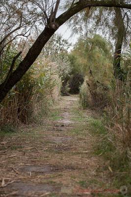 Trois sentiers sont ouverts au public, boucle de 4km, sentier du Butor sur pilotis (1km), et le sentier sur digue.  Réserve naturelle régionale de Scamandre, Vauvert