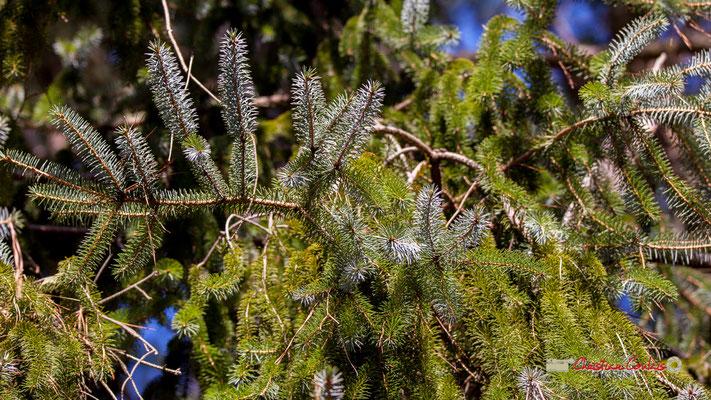 """""""Camaïeu vert d'aiguilles de pin"""" Réserve ornithologique du Teich. Samedi 16 mars 2019. Photographie © Christian Coulais"""