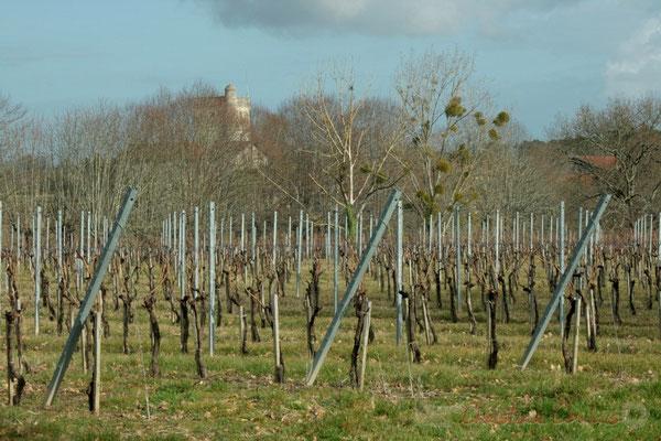 Vignoble et Château Baritault au loin. Carignan-de-Bordeaux