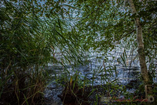 Les brochetons migrent vers les étangs d'Hourtin-Carcans (au nord) et de Lacanau (au sud) à l'automne...Étang de Cousseau