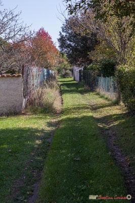Chemin d'accès aux anciens bâtiments agricole du domaine de Gratian. Avenue du bois du moulin, Cénac, Gironde. 16/10/2017