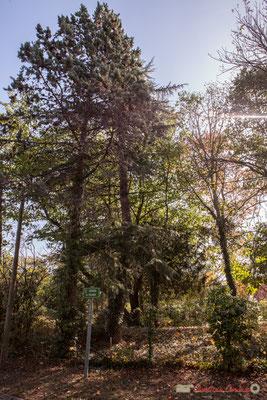 Parc arboré de la maison d'hôtes La Longère. Avenue de Pujade, Cénac, Gironde. 16/10/2017