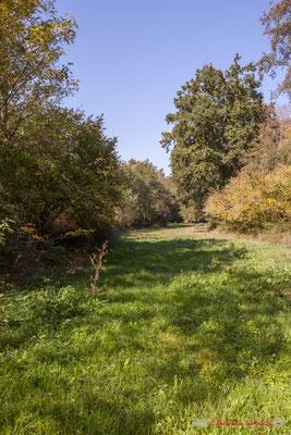Bassin naturel d'étalement de l'affluent de la Pimpine, le Rauzé. Avenue du bois du moulin, Cénac, Gironde. 16/10/2017