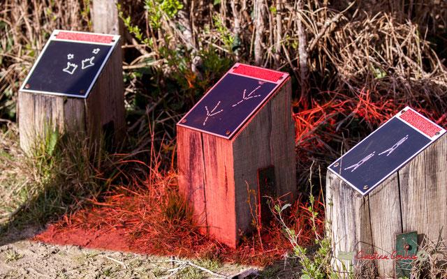 Jeu...de lumière, réserve ornithologique du Teich. Samedi 16 mars 2019