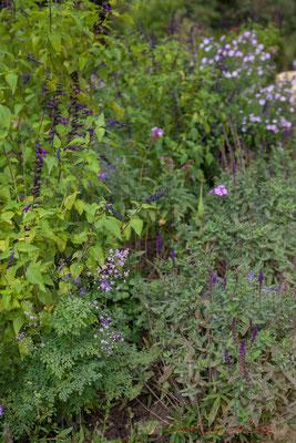 Jardins extraordianires, jardins de collection; Domaine de Chaumont-sur-Loire, Loir-et-Cher, Région Centre-Val-de-Loire. Mercredi 26 août 2015. Photographie © Christian Coulais