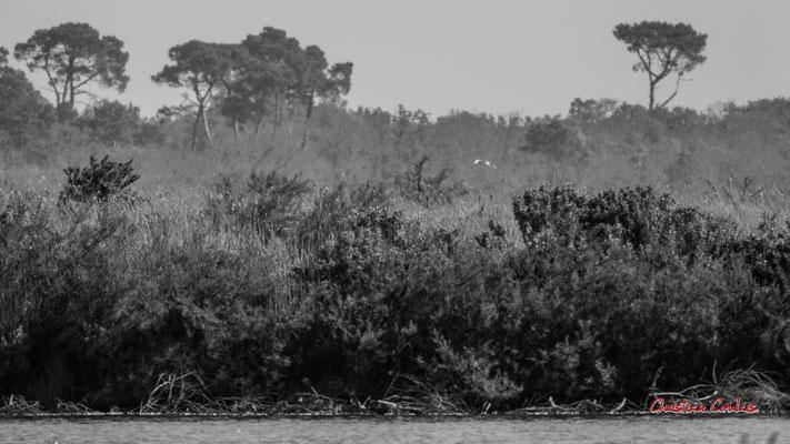 Réserve ornithologique du Teich. Samedi 3 avril 2021. Photographie © Christian Coulais