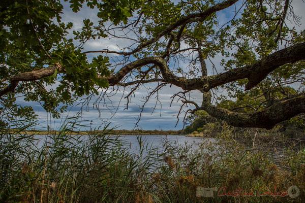 En plus de la lande inondée six mois chaque année, une zone marécageuse s'est constituée, parsemée d'étangs, d'Hourtin au bassin d'Arcachon...Étang de Cousseau