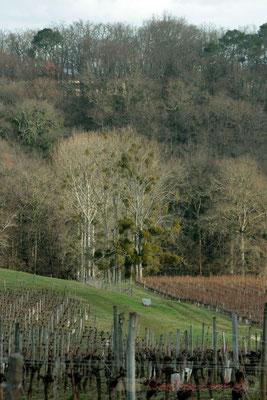 Prairies, bois, vignobles se succèdent sur les côtes de Bordeaux. Carignan-de-Bordeaux