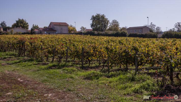 Vignoble du Clos Montagne, depuis l'avenue du bois de filles, Cénac, Gironde. 16/10/2017