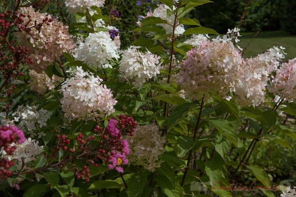 Jardins extraordinaires, jardins de collections; Domaine de Chaumont-sur-Loire. Mercredi 26 août 2015. Photographie © Christian Coulais