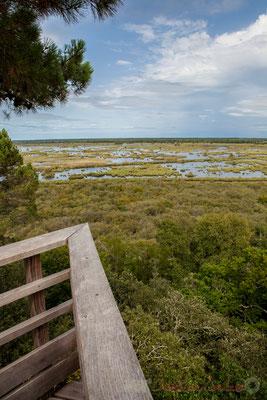 Depuis le sommet de la tour d'observation sur les marais de l'étang de Cousseau...