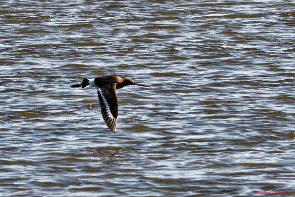 Réserve ornithologique du Teich. Photographie Jean-Pierre Couthouis. Samedi 3 avril 2021