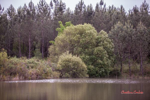 La grande gravière. Forêt de Migelan, espace naturel sensible, Martillac / Saucats / la Brède. Samedi 23 mai 2020. Photographie : Christian Coulais