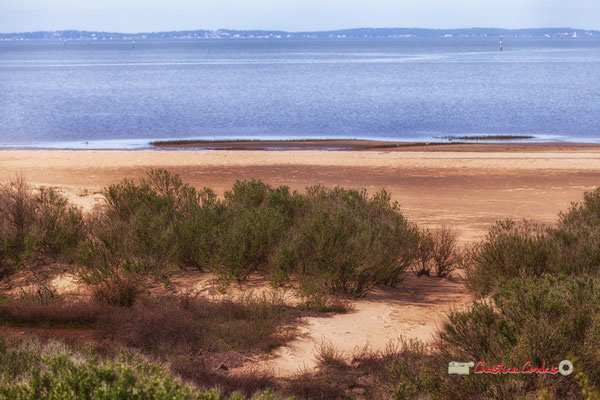 Bassin d'Arcachon, delta de la Leyre. Réserve ornithologique du Teich. Samedi 16 mars 2019. Photographie © Christian Coulais