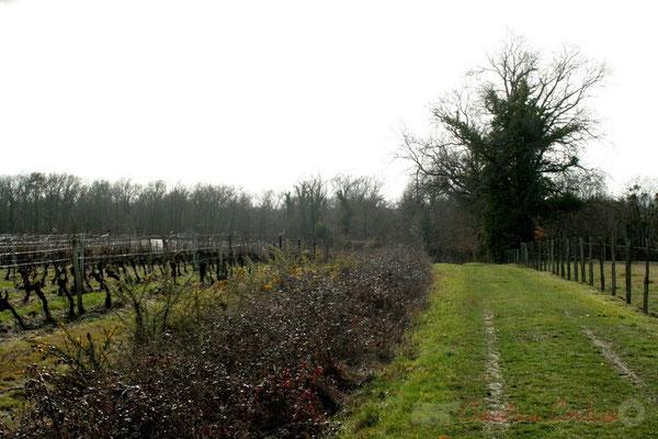 Chemin de randonnée et vignoble sur Carignan-de-Bordeaux