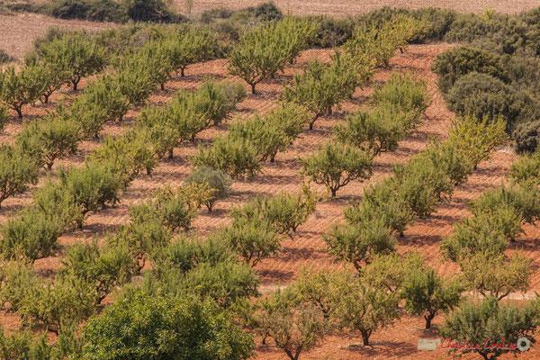 Champ d'oliviers, Lumbier, Navarra