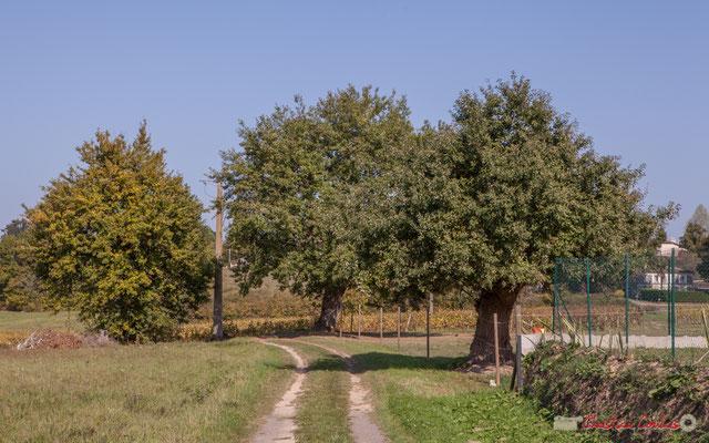 Recto Chemin de Mons, vers le hameau du même nom. Cénac, Gironde. 16/11/2017