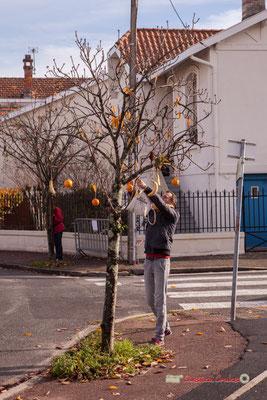Olivier, ramasseur de fruits; Regards en biais, Cie La Hurlante, Hors Jeu / En Jeu, Mérignac. Samedi 24 novembre 2018