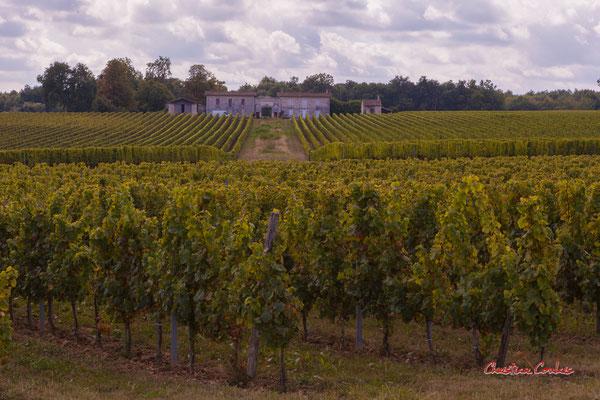 """""""Château Guibon, vignoble de l'Entre-Deux-Mers"""" De Frontenac à Espiet; 11km. Ouvre la voix, samedi 4 septembre 2021. Photographie © Christian Coulais"""