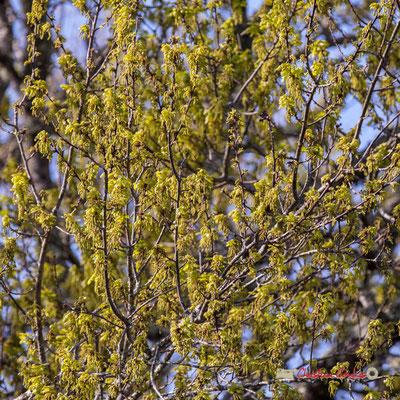 """""""Camaïeu de vert"""" sur le sentier de la réserve ornithologique du Teich. Samedi 16 mars 2019"""