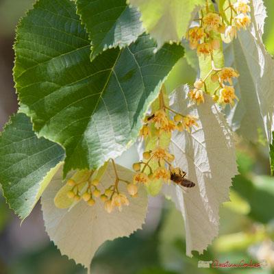 """""""Les cigales écoutent la musique, les abeilles butinent..."""" Festival JAZZ360, 10 juin 2017, Camblanes-et-Meynac"""
