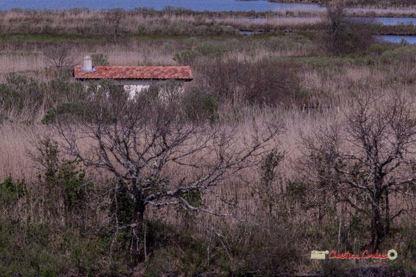Maison des roseliers depuis l'observatoire 360° de la réserve ornithologique du Teich, samedi 16 mars 2019