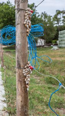 Suivons le fil bleu de la balade à pied N°27 du Guide 2016 du Pays de Saint-Gilles-Croix-de-Vie, Vendée, Pays de la Loire
