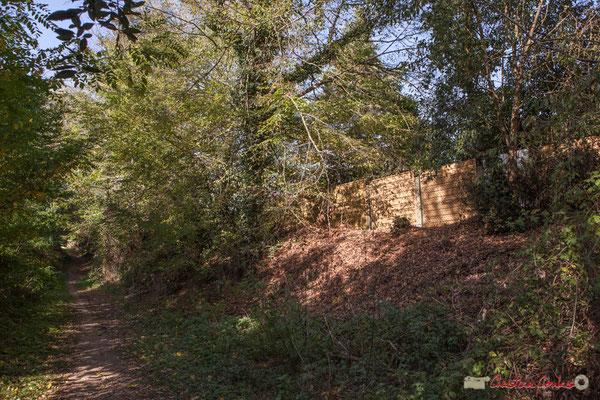 Talus du chemin de Brice, à conserver arboré afin de ne pas avoir de ravinement de l'argile. Cénac, Gironde. 16/10/2017