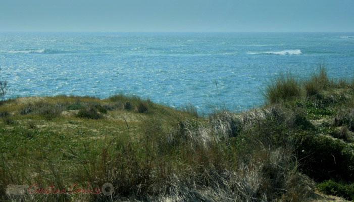 Dune végétalisée, Petit-Nice de Pyla-sur-Mer, route de Biscarrosse, forêt domaniale de La Teste-de-Buch