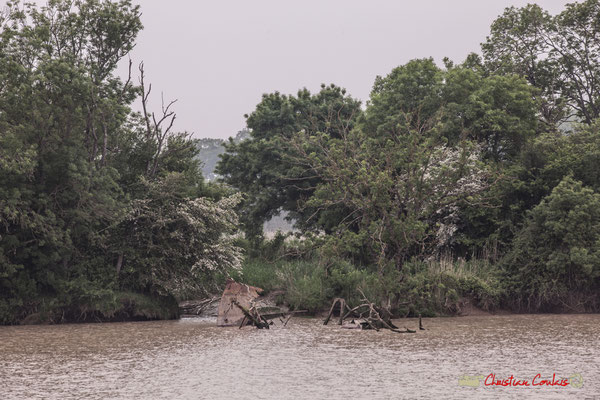 Epave d'un bateau aux abords Est de l'île Nouvelle. Visite de l'île Nouvelle. 06/05/2018