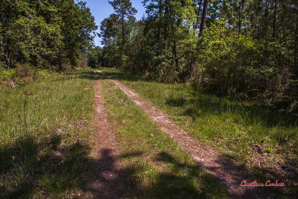 Allée enherbée. Forêt de Migelan, espace naturel sensible, Martillac / Saucats / la Brède. Vendredi 22 mai 2020. Photographie : Christian Coulais